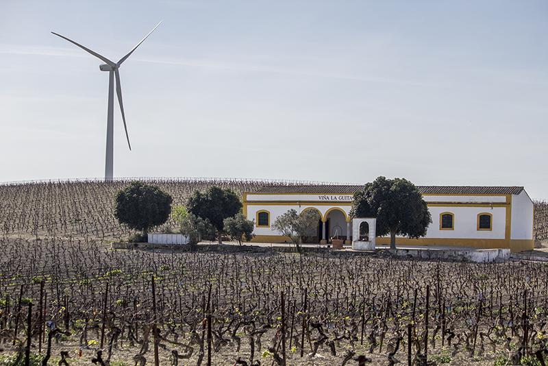 En la imagen, la viña La Guita, en la carretera de Jerez a Sanlúcar. Foto JC Sánchez