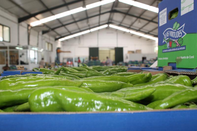 La cooperativa está formada por agricultores de Barbate, Conil, Vejer, Medina, Chiclana y Puerto Real
