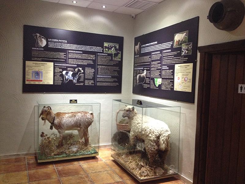 El Museo del Queso se ha convertido en una gran herramienta de difusión del producto