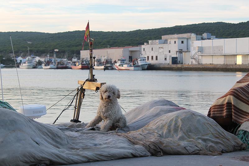 Imagen del puerto pesquero de Barbate. Foto: J.M.