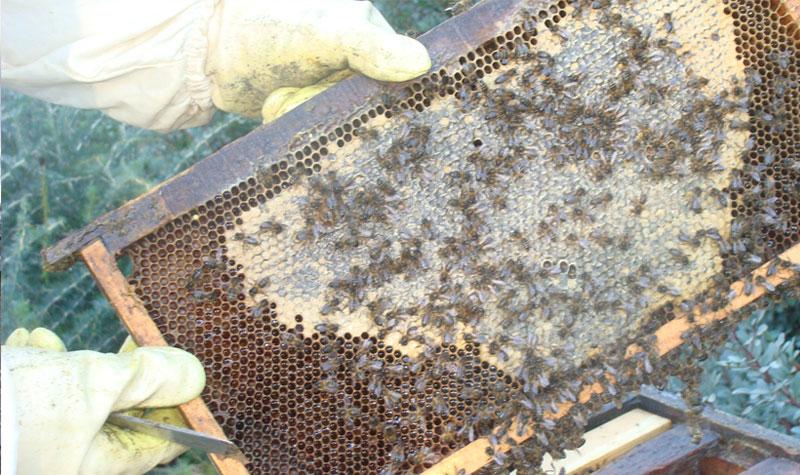 Panel de abejas de la empresa, Apícola Granja de Fátima en Ubrique. Panel de abejas de la empresa, Apícola Granja de Fátima en Ubrique. Foto: EI